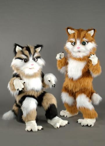location mascotte chat tigré n°134